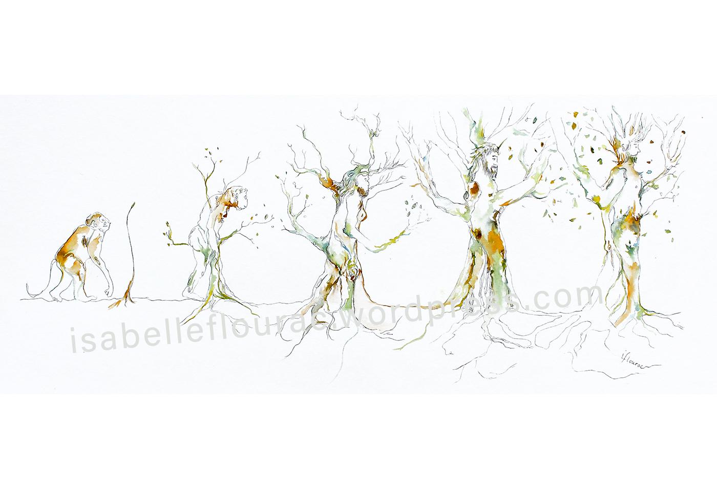Evolution, dessin à l'encre, Isabelle Flourac. Un singe devient homme tout en devenant arbre.