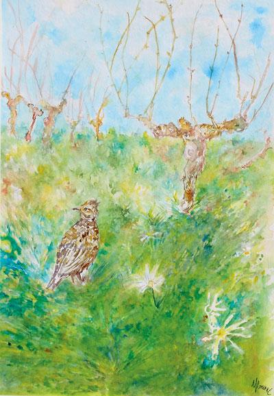 Alouette lulu dans la vigne en hiver. Dessin à l'encre et aquarelle, Isabelle FLourac